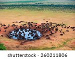 Herd of buffaloes in water hole