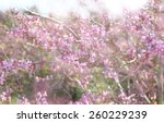 double exposure of spring... | Shutterstock . vector #260229239