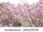 double exposure of spring... | Shutterstock . vector #260229239