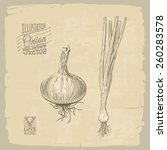vector hand drawn illustration... | Shutterstock .eps vector #260283578