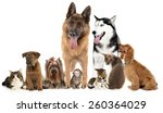 Stock photo cute pets isolated on white 260364029