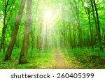 sun beam in a green forest   Shutterstock . vector #260405399