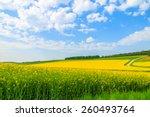 Yellow Rapeseed Flower Field...