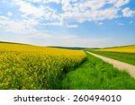 Countryside Road Along Yellow...