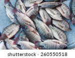 Tilapia Fishes In The Fresh...
