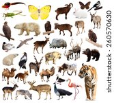 Set Of Asian Animals. Isolated...