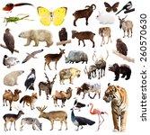 Set Of Asian Animals. Isolated...