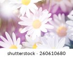 summer field with white daisies.... | Shutterstock . vector #260610680