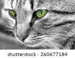 Cat With Green Eyed Eyes