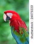 parrot | Shutterstock . vector #26073223
