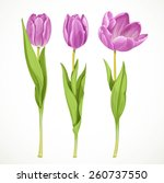 Three Vector Purple Tulips...