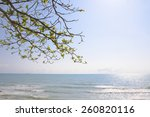Tree Branches On The Beach...