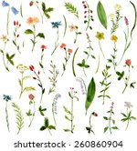 Set Of Watercolor Drawing Herb...