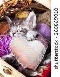 Stock photo sleeps kitten and heart pillow 260869010
