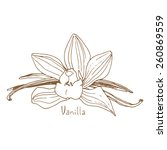 spices  vanilla  sketch... | Shutterstock .eps vector #260869559