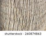 Palm Tree Trunk Texture