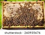 macro shot of bees swarming on...   Shutterstock . vector #260935676