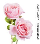 Pink Rose Bunch Isolated On...