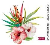 vector  watercolor    hibiscus  ... | Shutterstock .eps vector #260943650