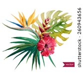 vector  watercolor  strelitzia  ... | Shutterstock .eps vector #260943656