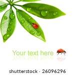 Ladybug Sitting On A Fresh...