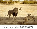 Cecil The Iconic Lion And His...