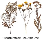 Set Of Wild Dry Pressed Flower...