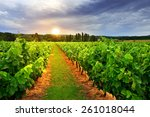 vineyards in vaucluse at... | Shutterstock . vector #261018044