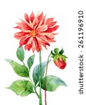 two red dahlia isolated on... | Shutterstock . vector #261196910
