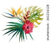 watercolor  birds of paradise ... | Shutterstock . vector #261216128