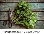 fresh herbs. melissa  rosemary... | Shutterstock . vector #261262940