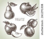 hand drawn sketch fruit set.... | Shutterstock .eps vector #261291338