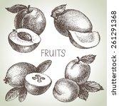 hand drawn sketch fruit set.... | Shutterstock .eps vector #261291368