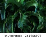 Lush Tropical Foliage.