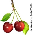 cherry berried on a tree branch.... | Shutterstock .eps vector #261475820