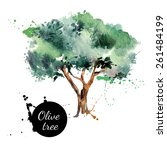 olive tree vector illustration. ... | Shutterstock .eps vector #261484199