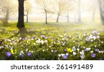 abstract sunny beautiful spring ... | Shutterstock . vector #261491489