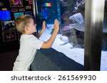 little boy looking at fish tank ... | Shutterstock . vector #261569930