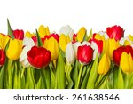 A Number Of Tulips Of Different ...