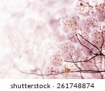 cherry blossom in full bloom.... | Shutterstock . vector #261748874