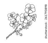 Sketch. Twig Sakura Blossoms ....