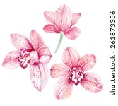 Watercolor Pink Orchid Flowers...