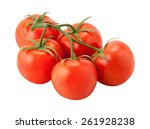 tomatoes on the vine with a... | Shutterstock . vector #261928238
