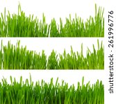 green grass isolated on white... | Shutterstock . vector #261996776