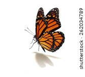 Stock photo beautiful monarch butterfly isolated on white background 262034789