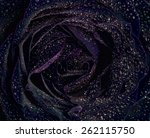 Black Rose Background  Covered...