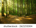 forest with light | Shutterstock . vector #262153304