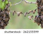 trust in teamwork of bees... | Shutterstock . vector #262155599