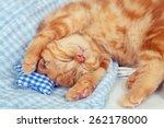 Stock photo cute kitten is sleeping 262178000