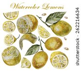 watercolor lemon isolation on a ... | Shutterstock .eps vector #262216634